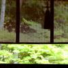悩んでいたことが吹っ切れた喜びの瞬間 厚かましい 明るい 明るくなった 先が見えた  熱い あつっ ほとんど 大体 京都の手話