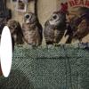【フツウのコト11】鳥のいるカフェ浅草店