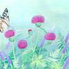 旅する蝶々