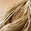 納豆の栄養と効果!意外と知られていない!