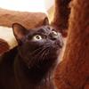 今日の黒猫モモ&白黒猫ナナの動画ー715