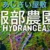 4Kドローン空撮『服部農園あじさい屋敷』今年一番絶景 Hydrangea Japan