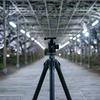 【一眼レフ】あしかがフラワーパークで2019年1回目の藤を撮影(2019年3回目)