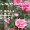 ❅大雪/たいせつ/heavy snow❅二十四節気❀山茶花が満開です