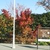 京都嵐山へ紅葉観に行ってきました。