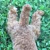 暑さ対策で面積を増やす犬