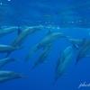 ハワイ、オアフ島で名門イルカ大学に参加。野生のイルカに出会える貴重な体験でした。(Hawaii, O'ahu, Dolphin, activity)