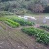 秋野菜の収穫祭、山の中の一軒畑