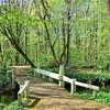 健康に役立つ「森林浴」自然のチカラで日頃のストレスを解消しよう!