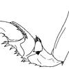 ウオノエ類の顎脚