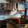 猫のチコとの思い出の巻