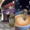 【テクノロジー】家が歌舞伎の舞台に?AR歌舞伎がすごい!!