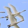 新潟探鳥 2