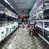 熱帯魚を買う時に注意すべきこと