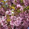 賀茂神社春季例大祭が・・・