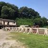日吉に馬がいること知っていましたか?(慶応大学馬術部の馬場)