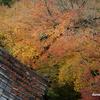 京都紅葉狩りの旅 8