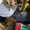 犬の多頭飼い日記:とろちゃん、2か月ぶりの痙攣