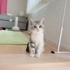 ぺぐねこ家にはじめての子猫がやってきた!