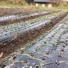 玉ねぎの定植で自らの成長を知る