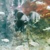 〔日記〕新江ノ島水族館で年間パスポートを更新する