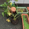 野良観葉植物でした◉