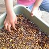 【花育!】四歳さんと一歳ちゃん、初めての花育。