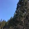 登山道の整備。