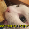 猫がポテチを食べた!大丈夫?ダメですよ!