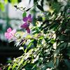 熱帯資源植物温室