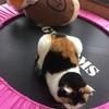 猫とかインバウンドの恩恵とか