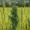 Legalize Medical Marijuana
