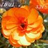 春分/しゅんぶん/二十四節気/Vernal equinox