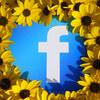 Facebook PagePlugin埋め込み 方法