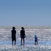 """海岸干潟は今、旅鳥たちで大賑わい……""""オバシギ"""" """"オオメダイチドリ"""" """"キョウジョシギ"""" """"ムナグロ"""" など……   野鳥撮影《第230回目》"""