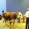 乳牛にセレンというミネラルを使ってみると?