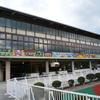 京都芝1600m(2歳戦)種牡馬別ランキング