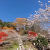 お花見&紅葉狩り