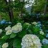 京都・大原 - 紫陽花咲く初夏の三千院