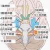 ゴエンカジーの偏頭痛と「Mukhaの周りに気づきを留めて」《瞑想実践の科学21》