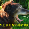 止まらない犬の咳、対処と「のど」を元気にする方法