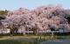 ダイナースクラブ 世界遺産・醍醐寺の観桜会 ライトアップされた夜桜を観賞