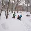 年越寒波の奥物部の森 雪嶺