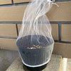 スティックタイプのカリフラワー栽培(プランター)・・・害虫除けは防虫ネットや不織布で!