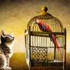 猫のケージ飼いのメリットとデメリットを経験者がまとめてみた