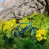 春を求めて 吉見町 さくら堤公園まで行ってきた。
