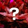 (水草 熱帯魚)おまかせアルテルナンテラ(水上葉) 2種×5本セット(無農薬)(計10本) 北海道航空便要保温