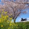 桜とおにぎりを求めてお散歩ツーリングに行ってきた