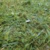 ボッシュの草刈り機で庭の雑草を一網打尽! こんなに楽しく草刈り出来るなんてすげぇ! EGC26レビュー