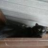 グレオ猫小屋に移動しデレデレになりました